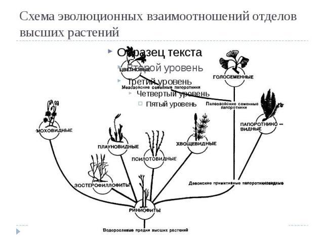 отделов высших растений