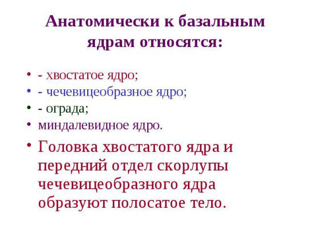 Ядро Чечевицеобразное
