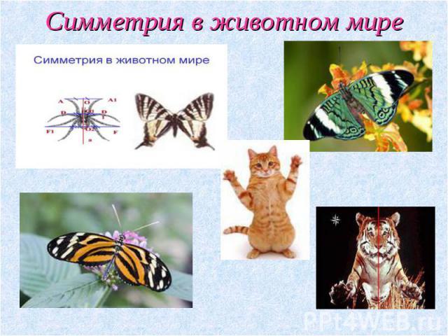 Реферат Симметрия в природе Социальная сеть работников образования Симметрия в животном мире реферат