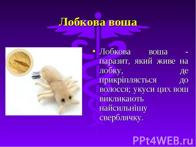 Лобкова воша Лобкова воша - паразит, який живе на лобку, де прикріпляється до волосся; укуси цих вош викликають найсильнішу сверблячку.
