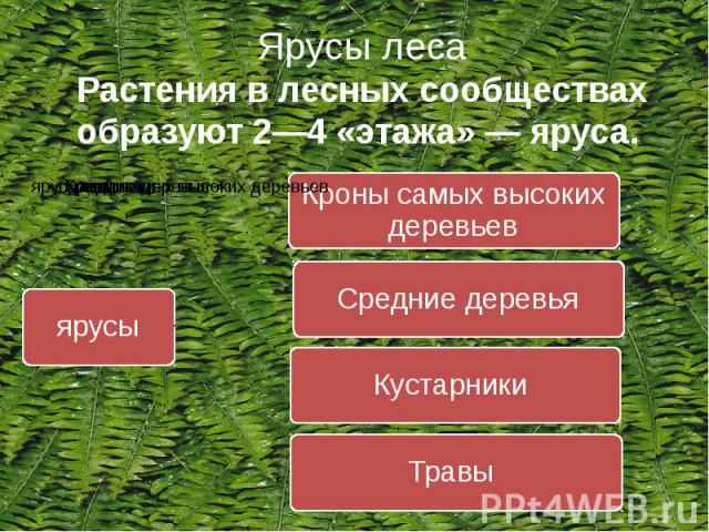 Под системой полезащитных лесных полос подразумевается полное покрытие определенной территории лесными полосами