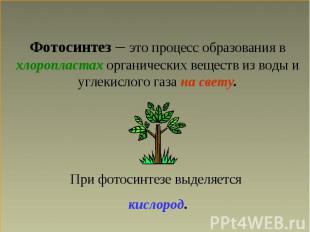 Фотосинтез 6 Класс Презентация.Rar