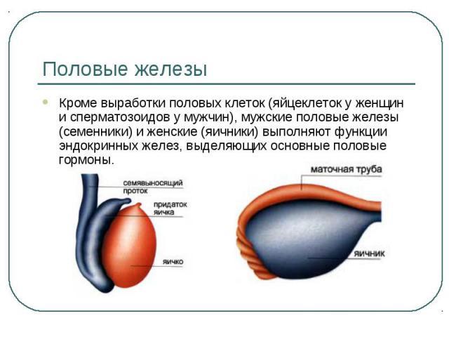 uvelichenie-virabotki-spermi