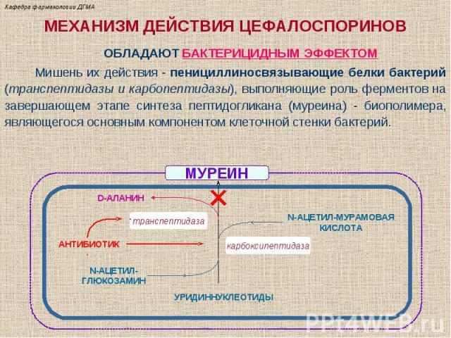 Цефалоспорин