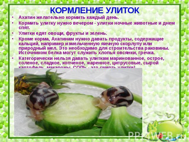 Чём кормить виноградных улиток в домашних условиях