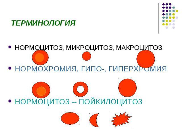 Макроцитоз фото