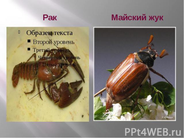 Как сделать майского жука