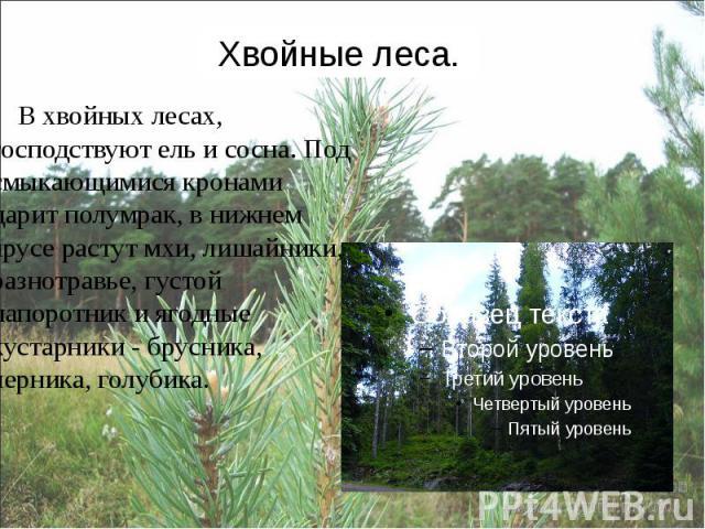 Почему в лесной зоне хвойные леса растут