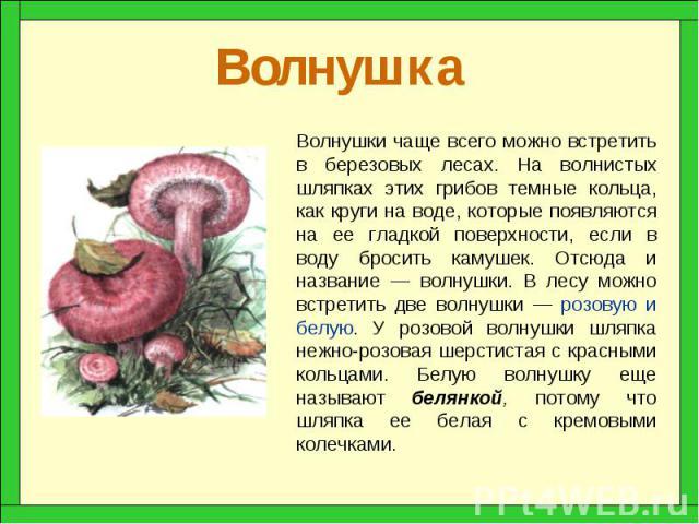 Доклад о грибе волнушка 1527