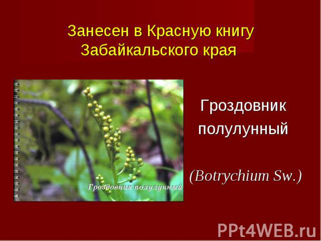Презентация На Тему Природа Забайкальского Края