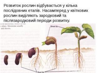Розвиток рослин відбувається у кілька послідовних етапів. Насамперед у квіткових