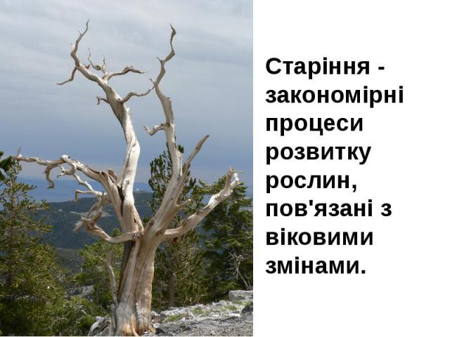 Старіння - закономірні процеси розвитку рослин, пов'язані з віковими змінами. Старіння - закономірні процеси розвитку рослин, пов'язані з віковими змінами.