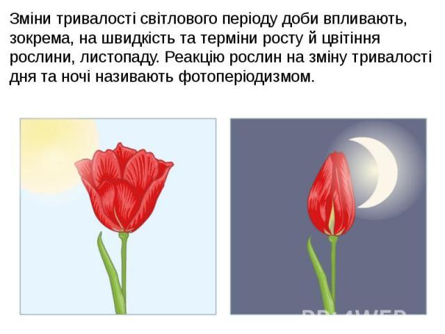 Зміни тривалості світлового періоду доби впливають, зокрема, на швидкість та терміни росту й цвітіння рослини, листопаду. Реакцію рослин на зміну тривалості дня та ночі називають фотоперіодизмом. Зміни тривалості світлового періоду доби впливають, з…
