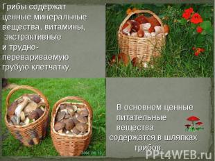 Презентация На Тему Грибы Ягоды Для Дошкольников