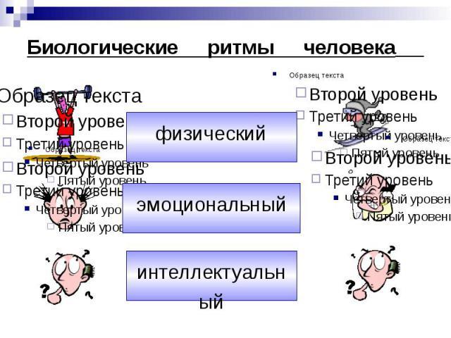 Биологические ритмы и работоспособность человека реферат 8748