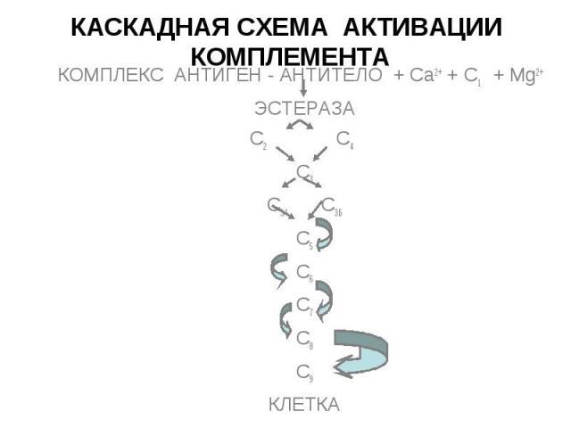Эстераза