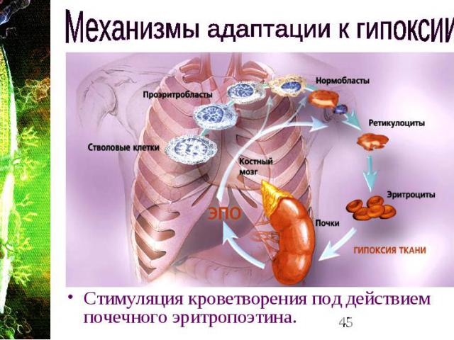 практическая работа кислородное голодание белье