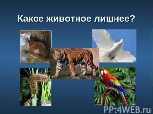 6. Какое животное лишнее?