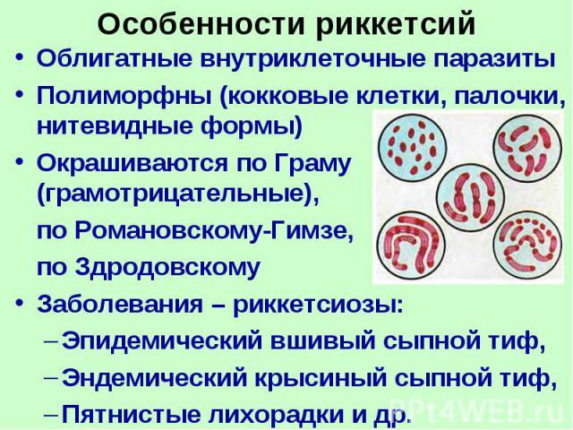 атлас паразитов человека