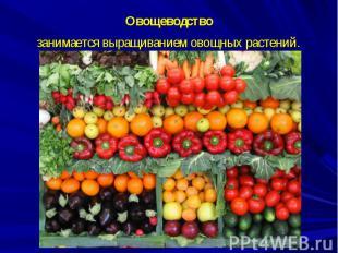 Овощеводство занимается выращиваниемовощных растений.