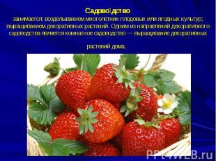 Садоводство занимается: возделыванием многолетних плодовых или ягодных культур;