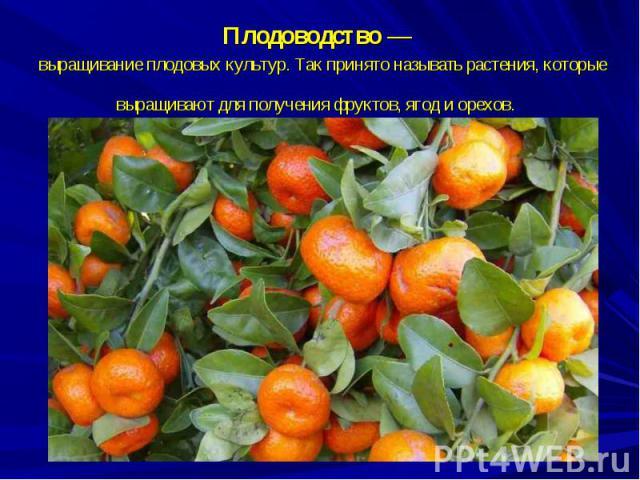 Плодоводство— выращивание плодовых культур. Так принято называть растения, которые выращивают для получения фруктов, ягод и орехов.
