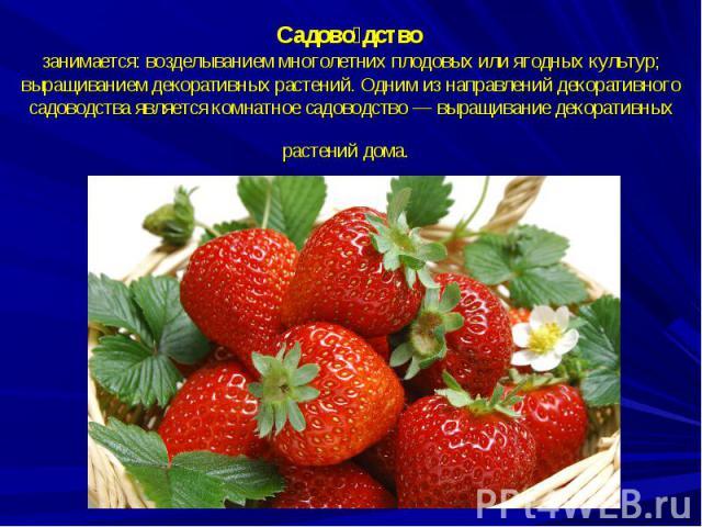 Садоводство занимается: возделыванием многолетних плодовых или ягодных культур; выращиванием декоративных растений. Одним из направлений декоративного садоводства является комнатное садоводство — выращивание декоративных растений дома.