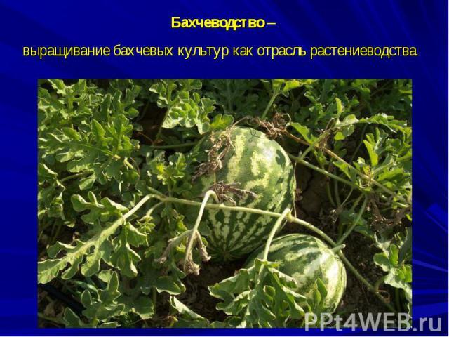Бахчеводство – выращивание бахчевых культур как отрасль растениеводства.