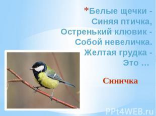Белые щечки - Синяя птичка, Остренький клювик - Собой невеличка. Желтая грудка -