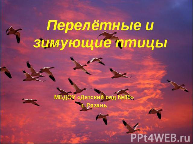 Перелётные и зимующие птицы МБДОУ «Детский сад №85» г. Рязань