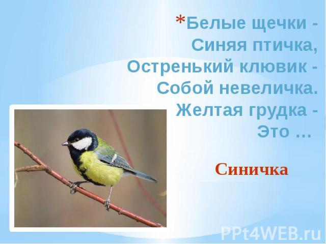 Белые щечки - Синяя птичка, Остренький клювик - Собой невеличка. Желтая грудка - Это … Синичка