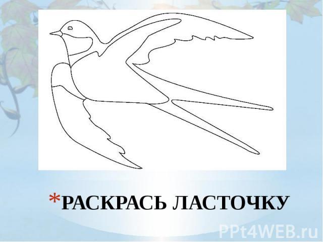 РАСКРАСЬ ЛАСТОЧКУ