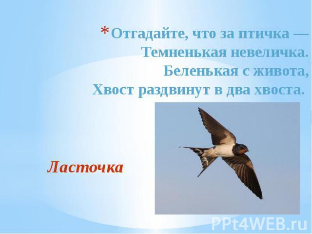 Отгадайте, что за птичка — Темненькая невеличка. Беленькая с живота, Хвост раздвинут в два хвоста. Ласточка