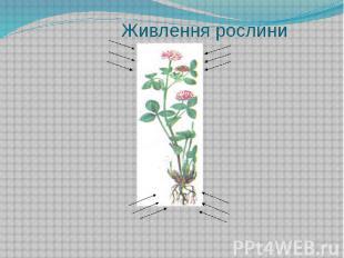 Живлення рослини