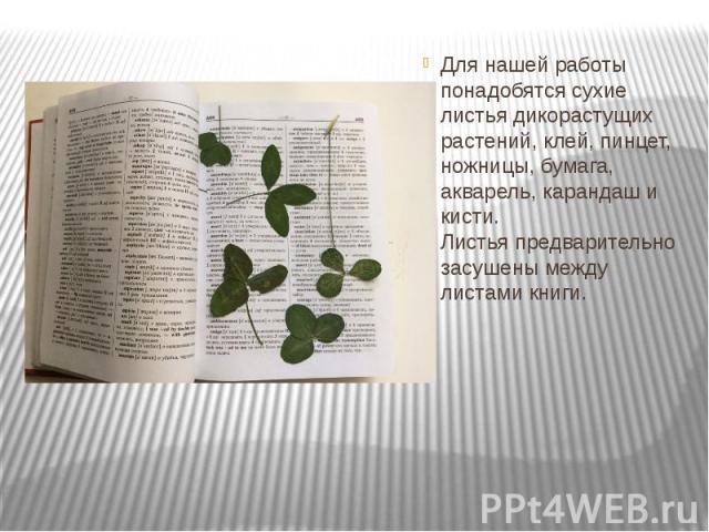 Для нашей работы понадобятся сухие листья дикорастущих растений, клей, пинцет, ножницы, бумага, акварель, карандаш и кисти. Листья предварительно засушены между листами книги. Для нашей работы понадобятся сухие листья дикорастущих растений, клей, пи…