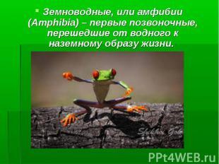 Земноводные, или амфибии (Amphibia) – первые позвоночные, перешедшие от водного