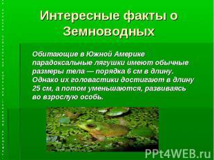 Интересные факты о Земноводных Обитающие в Южной Америке парадоксальные лягушки