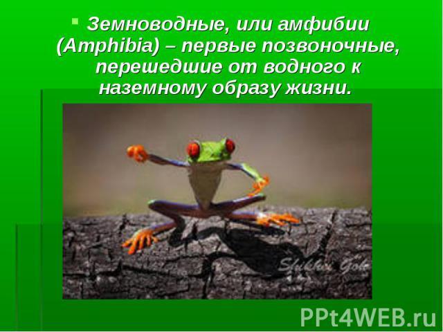 Земноводные, или амфибии (Amphibia) – первые позвоночные, перешедшие от водного к наземному образу жизни.