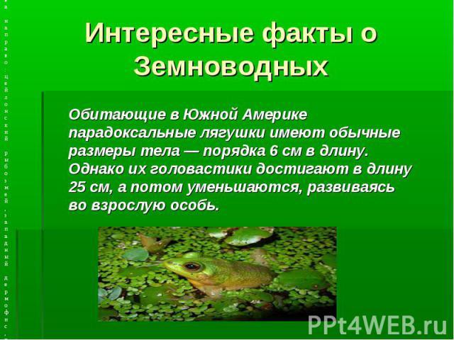 Интересные факты о Земноводных Обитающие в Южной Америке парадоксальные лягушки имеют обычные размеры тела — порядка 6 см в длину. Однако их головастики достигают в длину 25 см, а потом уменьшаются, развиваясь во взрослую особь.