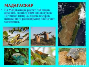 На Мадагаскаре растет 740 видов орхидей, водится 6000 видов жуков, 147 видов пти