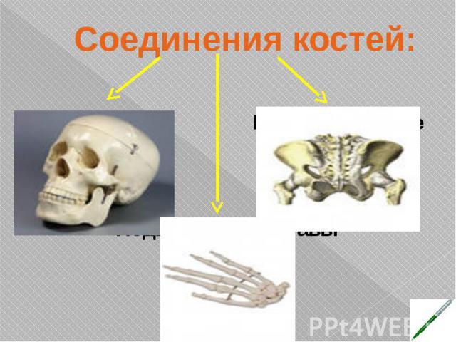 Соединения костей: