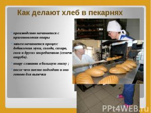 Как делают хлеб в пекарнях производство начинается с приготовления опары затем н