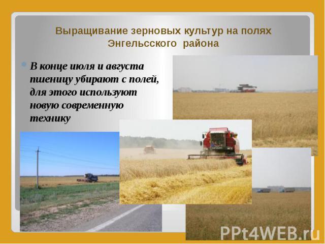 Выращивание зерновых культур на полях Энгельсского района В конце июля и августа пшеницу убирают с полей, для этого используют новую современную технику