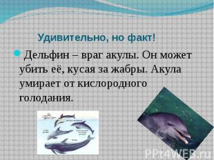 Удивительно, но факт!Дельфин – враг акулы. Он может убить её, кусая за жабры. Ак