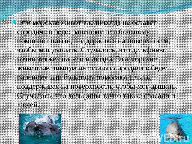 Эти морские животные никогда не оставят сородича в беде: раненому или больному помогают плыть, поддерживая на поверхности, чтобы мог дышать. Случалось, что дельфины точно также спасали и людей. Эти морские животные никогда не оставят сородича в беде…