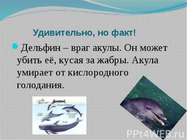 Удивительно, но факт!Дельфин – враг акулы. Он может убить её, кусая за жабры. Акула умирает от кислородного голодания.