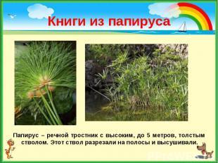 Папирус – речной тростник с высоким, до 5 метров, толстым стволом. Этот ствол ра