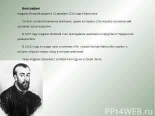 Биография Андреас Везалий родился 31 декабря 1514 года в Брюсселе. Биография Анд