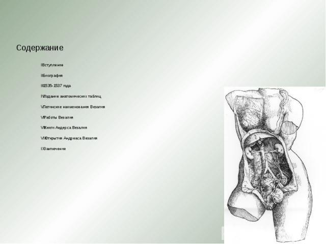 Вступление Вступление Биография 1535-1537 года Издание анатомических таблиц Латинские наименования Везалия Работы Везалия Книги Андерса Везалия Открытия Андреаса Везалия Заключение