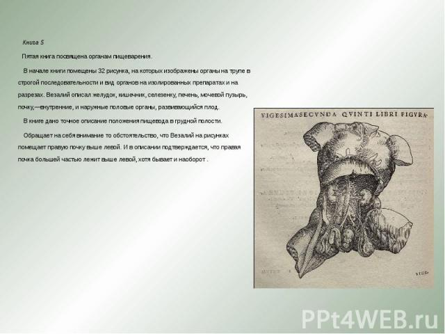 Книга 5 Книга 5 Пятая книга посвящена органам пищеварения. В начале книги помещены 32 рисунка, на которых изображены органы на трупе в строгой последовательности и вид органов на изолированных препаратах и на разрезах. Везалий описал желудок, …